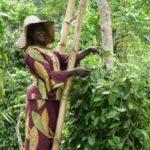 Moteris skinanti pipirus